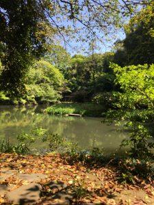 Sanshiro pond on the campus of the University of Tokyo.
