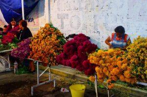 Cempasúchil flowers (marigolds)