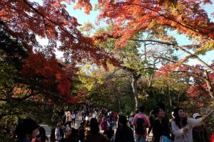 Some of the crowds at Mt. Takao taking photos with the autumn leaves