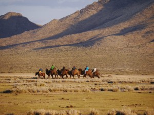 Camels in the Semi-Gobi2