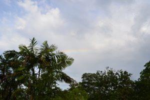 Un arco iris en la selva