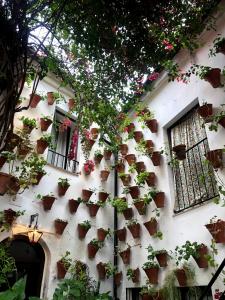 An example of a Córdoba courtyard